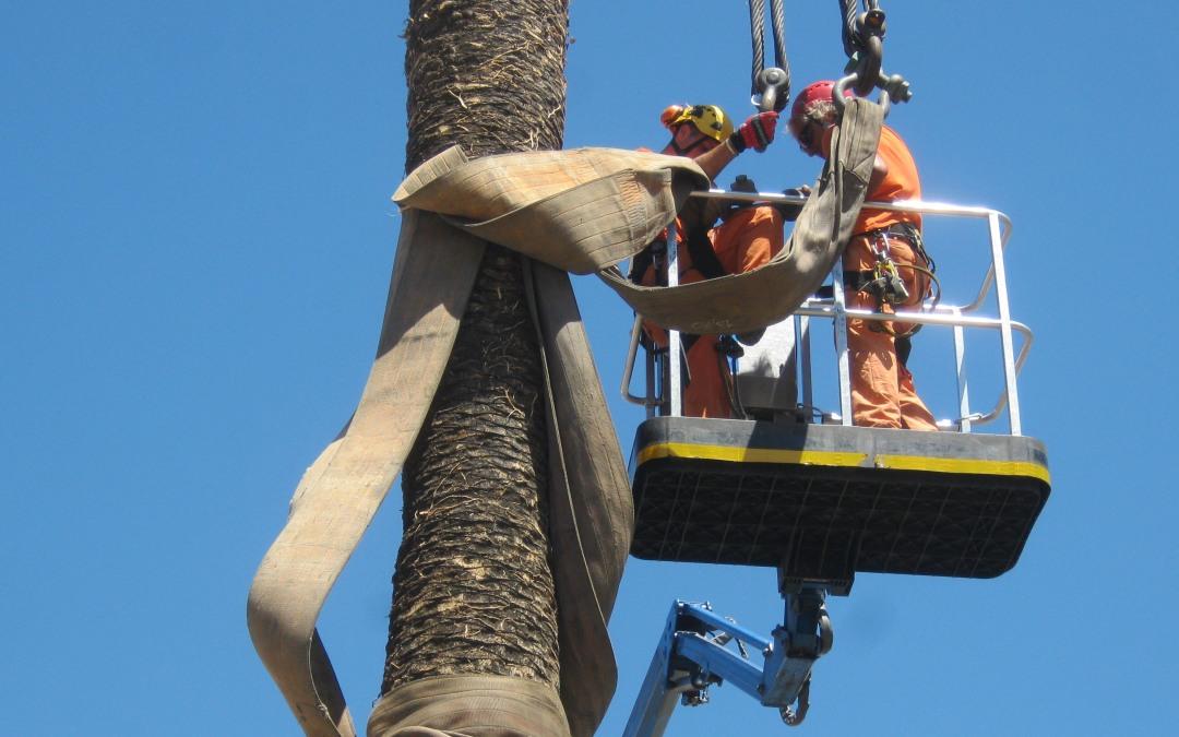 Potatura della palme