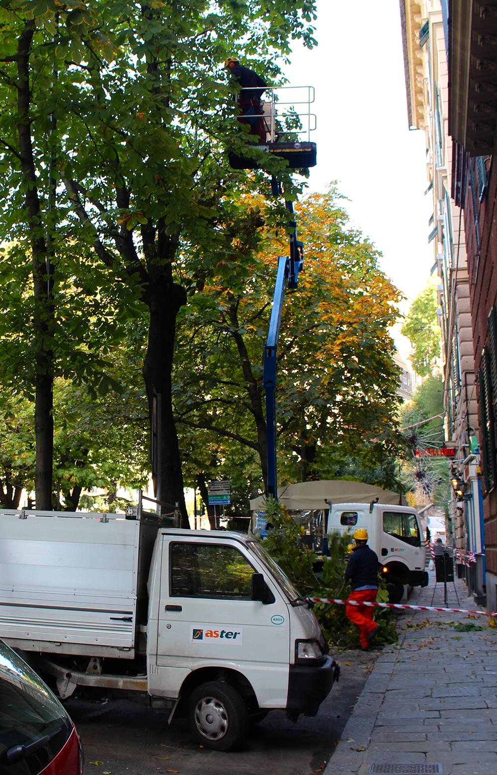 Potatura alberature Piazza Manin